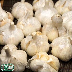 【B品・サイズ混合】有機 乾燥にんにく(福地ホワイト六片種) 1kg 有機JAS (青森県 あおもり南部有機生産組合) 産地直送