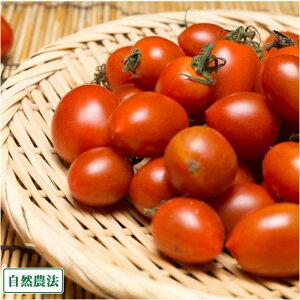 ミニトマト バラ詰 2kg 自然農法 (沖縄県 大宜味農場) 産地直送