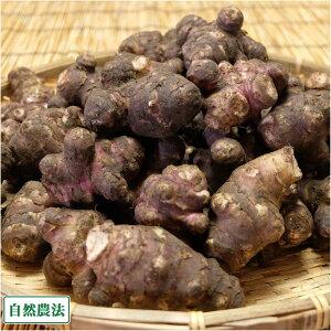 紫菊芋(土付き) 2kg (北海道 HJYさくら農場 食彩北海道) 産地直送