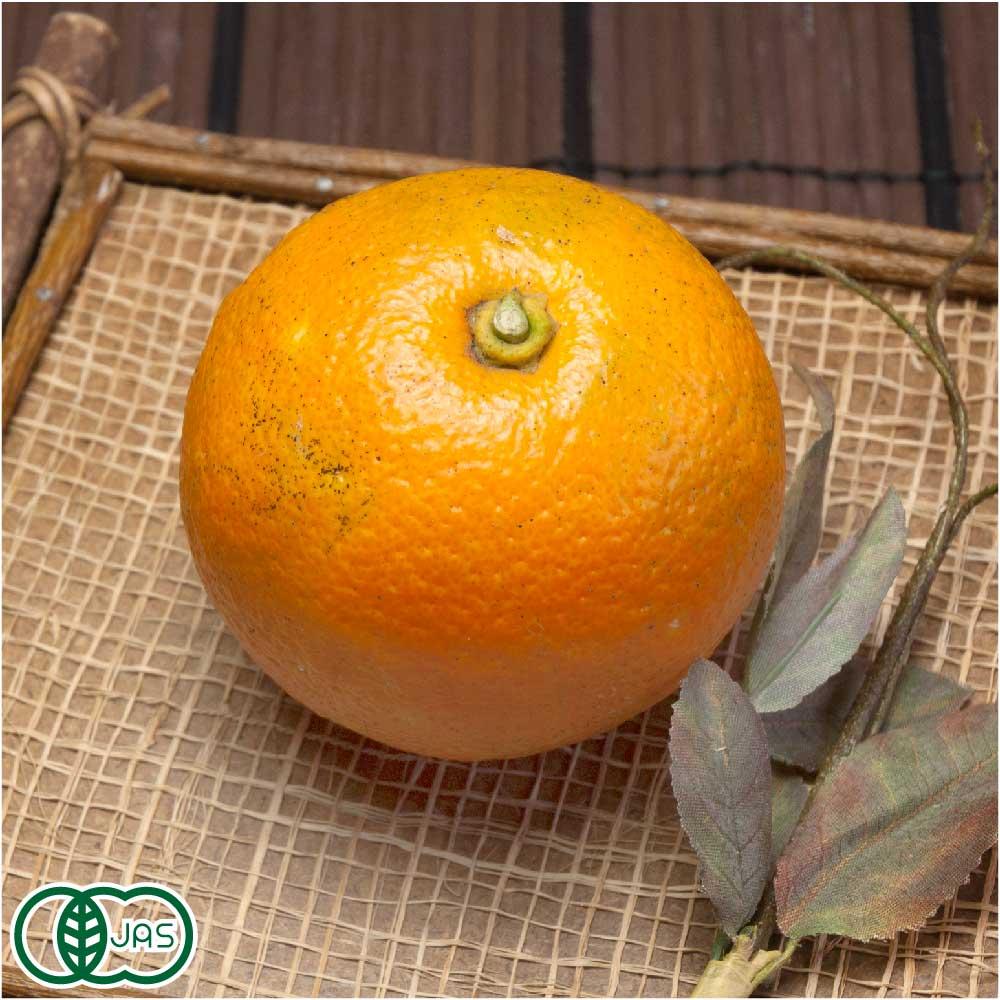 橙(だいだい) 4kg 有機JAS (佐賀県 佐藤農場株式会社) 産地直送