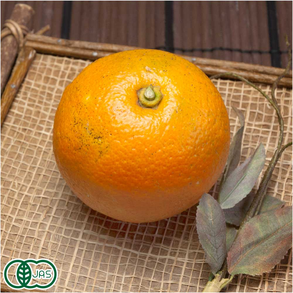 橙(だいだい) 9kg 有機JAS (佐賀県 佐藤農場株式会社) 産地直送