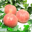 桃  ふるさと21おすすめ白桃「あかつき」 3kg(9〜11玉) 特別栽培 減農薬 送料無料 山形県産