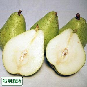 バラード(洋ナシ) 3kg 特別栽培 (長野県 さんさんファーム) 産地直送