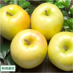 早生りんご(黄) A品 5kg箱 特別栽培 (青森県 田村りんご農園) 産地直送