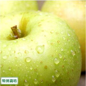 【特別セール】りんご 王林 A品 10kg箱 特別栽培 (青森県 阿部農園) 産地直送