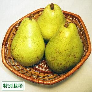 【B品】バラード(洋ナシ) 3kg 特別栽培 (長野県 さんさんファーム) 産地直送