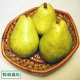 【B品】バラード(洋ナシ) 6kg 特別栽培 (長野県 さんさんファーム) 産地直送