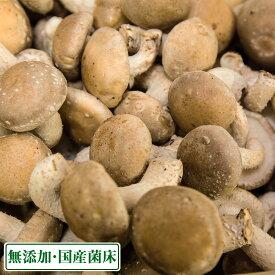 海風しいたけ 訳あり品 1kg(東京都 大竜ファーム)八丈島野菜・無農薬・無化学肥料・産地直送・送料無料