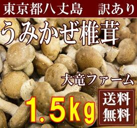 海風しいたけ 訳あり品 1.5kg(東京都 大竜ファーム)八丈島野菜・無農薬・無化学肥料・産地直送・送料無料