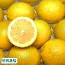 広島県レモン A品3kg(広島県 セーフティーフルーツ)農薬、化学肥料不使用・ノーワックス・送料無料・産地直送