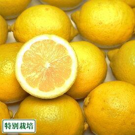 広島県レモン A品 3kg 特別栽培 (広島県 セーフティフルーツ) 農薬不使用 産地直送