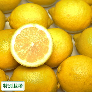 広島県レモン A品 5kg 特別栽培 (広島県 セーフティフルーツ) 農薬不使用 産地直送