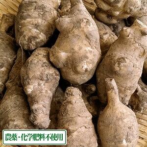 菊芋 土付き 5kg 農薬不使用 (青森県 佐々木農園) 産地直送
