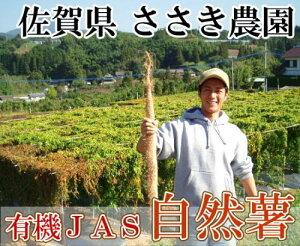 自然薯 家庭用約1kg(1〜2本)(佐賀県 ささき農園)有機JAS無農薬野菜・送料無料・産地直送・オーガニック・訳あり・お徳用