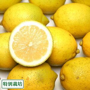 【訳あり】広島県レモン 10kg 特別栽培 (広島県 セーフティフルーツ) 農薬不使用 産地直送