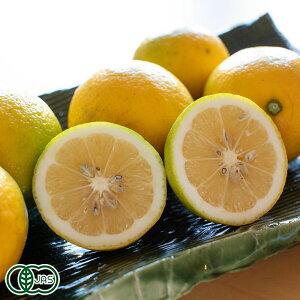 【セール】湘南プライムレモンライム サイズ混合 3kg 有機JAS (神奈川県小田原 自然園いしわた農場) 産地直送