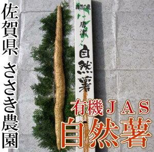 自然薯 贈答用1本(約1kg前後)(佐賀県 ささき農園)有機JAS無農薬野菜 産地直送