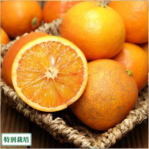 【訳あり】ブラッドオレンジ 3kg 特別栽培 (広島県 セーフティフルーツ) 産地直送
