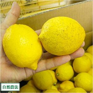 【A・B品混合】 レモン 10kg 自然農法 (広島県 道谷農園) 産地直送