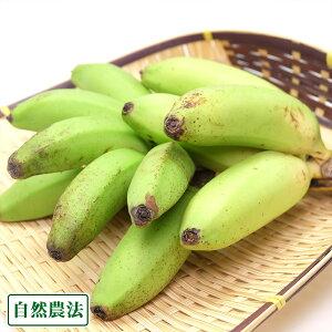 ミニバナナ 1kg 自然農法 (沖縄県 石垣島無農薬自然農場) 産地直送