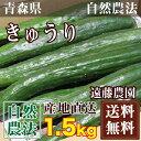 きゅうり 1.5kg(約10-15本)(青森県 遠藤農園)自然農法無農薬野菜・送料無料・産地直送