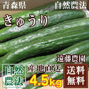 きゅうり 1.5kg×3箱(青森県 遠藤農園)自然農法無農薬野菜・送料無料・産地直送