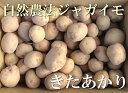 きたあかり(セール) A品 5kg(青森県 遠藤農園)自然農法無農薬じゃがいも・送料無料・産地直送