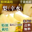 幸水梨 5kg箱(16〜20玉)(温市)特別栽培梨・送料無料