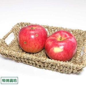 早生りんご(赤) 訳あり3kg箱 特別栽培 (青森県 田村りんご農園) 産地直送