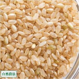 【令和2年度産】 つがるロマン 玄米 10kg 自然農法 (青森県 阿部農園) 産地直送