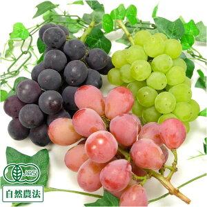 【予約商品】 3種のぶどうセット 1kg 自然農法 (宮城県 後藤ぶどう園) 産地直送