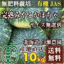 完熟みやこかぼちゃ サイズ無選別10kg(北海道 白瀬農園)有機JAS無農薬野菜・送料無料・産地直送 P20Aug16