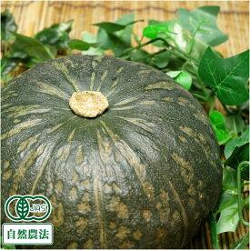 かぼちゃ(栗将軍) 約10kg 有機JAS 自然農法 (北海道 はるか農園) 産地直送