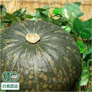 かぼちゃ 約20kg 有機JAS 自然農法 (北海道 はるか農園) 産地直送