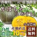 かぼちゃ[いかずち] 10kg(5〜6玉)(青森県 小泉農園)自然農法無農薬野菜・送料無料・産地直送