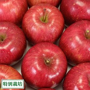 【予約商品】ふじ 秀品5kg箱 特別栽培 (青森県 田村りんご農園) 産地直送
