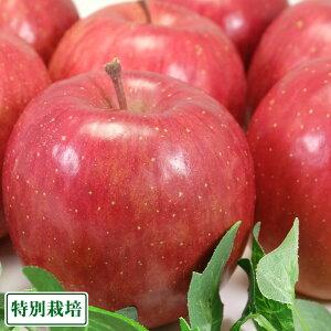 サンふじ 秀品 10kg箱 特別栽培 (青森県 阿部農園) 産地直送