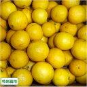 黄金柑 約5kg 特別栽培 (静岡県 外山農園) 産地直送