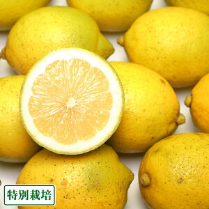 【訳あり】広島県レモン 7kg 特別栽培 (広島県 セーフティフルーツ) 農薬不使用 産地直送