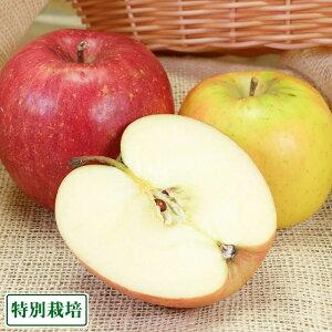 青森りんご2色セット A品3kg箱 特別栽培 (青森県 田村りんご農園) 産地直送