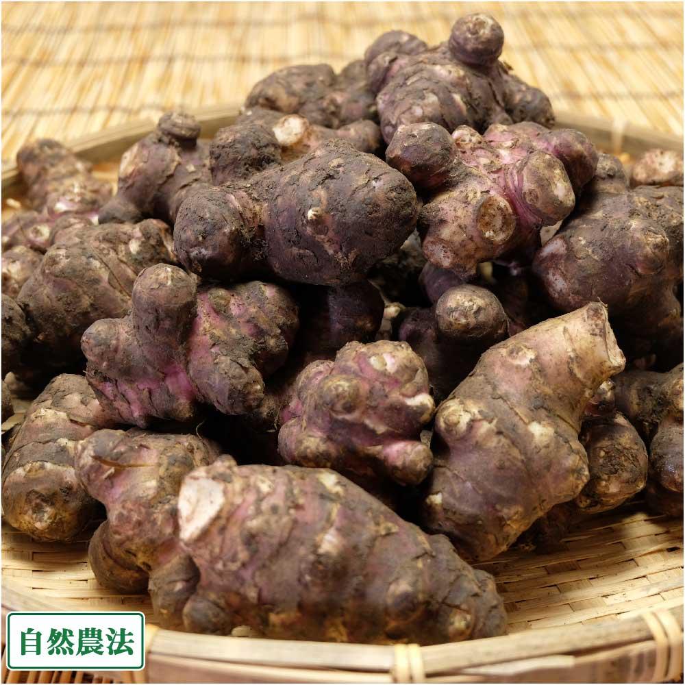 紫菊芋(土付き) 4kg (北海道 HJYさくら農場 食彩北海道) 産地直送