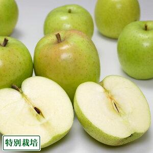 【特別セール】王林 小玉秀品5kg箱 特別栽培 (青森県 阿部農園) 産地直送