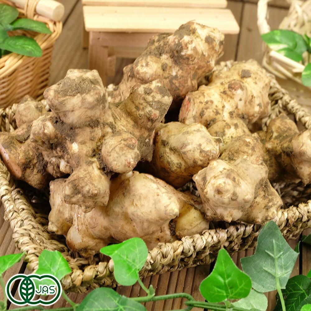 菊芋 1kg 有機JAS (熊本県 (株)肥後やまと) 産地直送