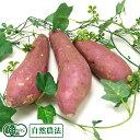 さつまいも(紅はるか) 5kg 有機JAS 自然農法 (熊本県 那須自然農園) 産地直送