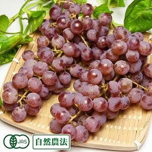 【家庭用】甲州 1kg 自然農法 (山形県 稲泉農園) ぶどう 産地直送