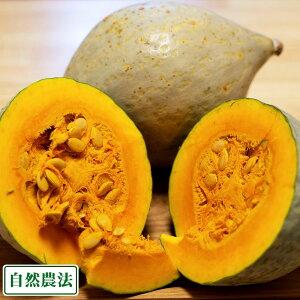 白栗かぼちゃ 5kg 自然農法 (青森県 小泉農園) 産地直送