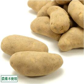 【サイズ混合】 メークイン 20kg 有機JAS転換期間中 (北海道 斎藤農場) 産地直送