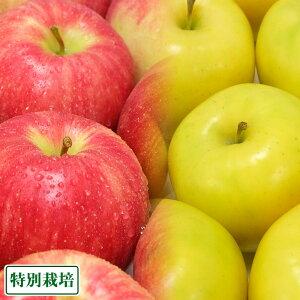 りんごセット A品 5kg 特別栽培(無・無) (青森県 北上農園) 産地直送