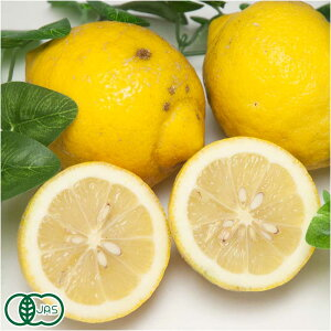 【A・B品混合】リスボンレモン 5kg 有機JAS (広島県 瀬戸内海の恵み普及会) 産地直送