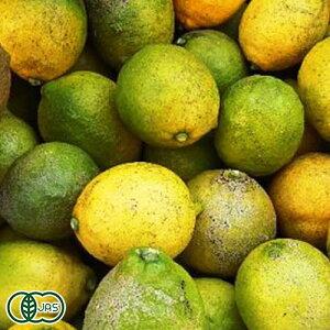 【加工用】リスボンレモン 10kg 有機JAS (広島県 瀬戸内海の恵み普及会) 産地直送